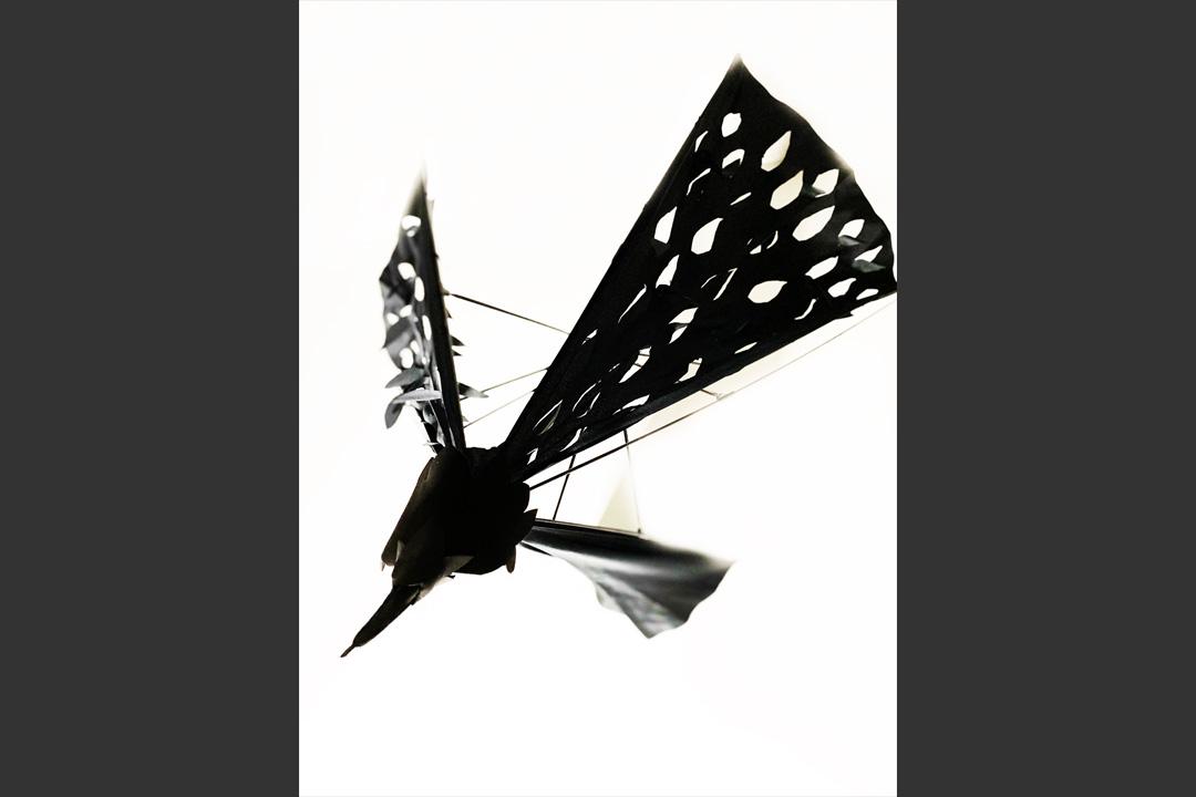 UmbrellatoriumLookCrow4